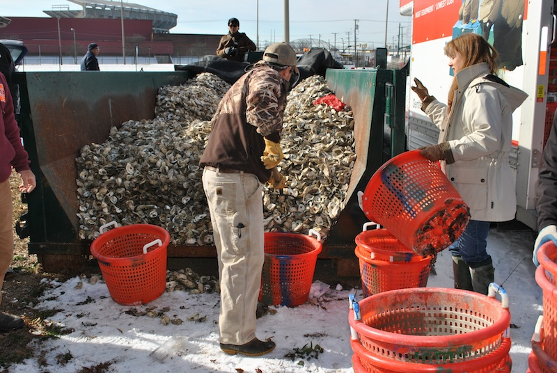 Volunteers work to shovel oyster shells out of the dumpster where they've been collected and into baskets for transportation.  (Chesapeake Bay Foundation )