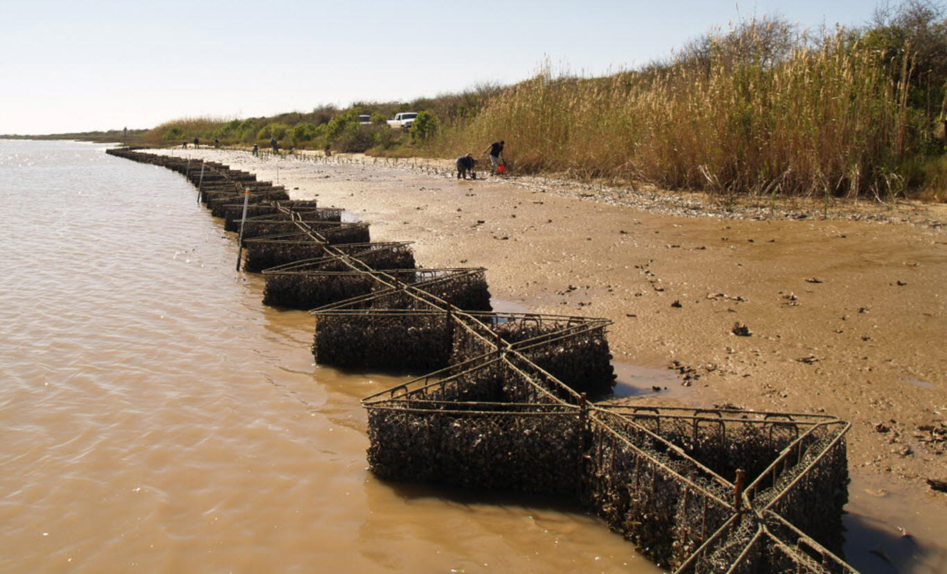 erosion control with oysters